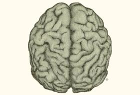 ¿Es el intestino nuestro segundo cerebro?